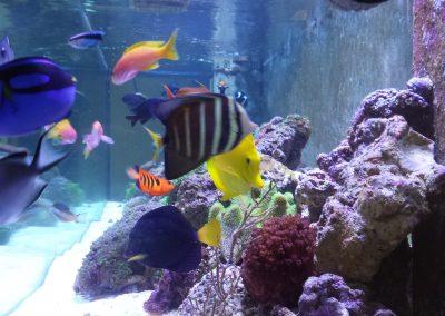 Fish Looking