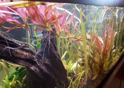 Freshwater Plants One