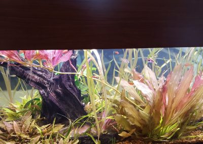 Freshwater Plants Two